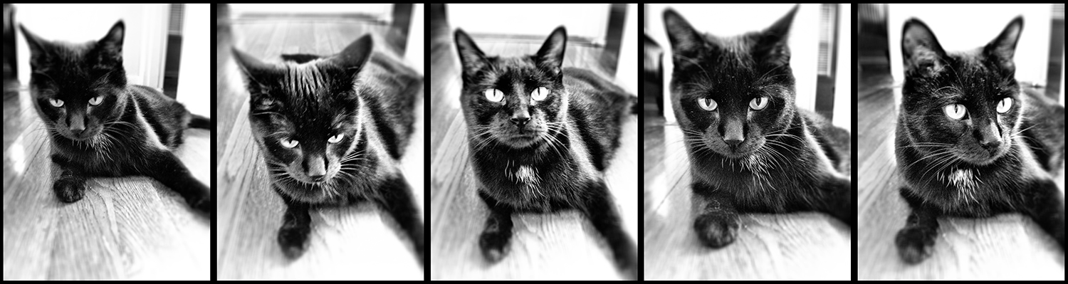 the many faces of baby ginsu (camera+)