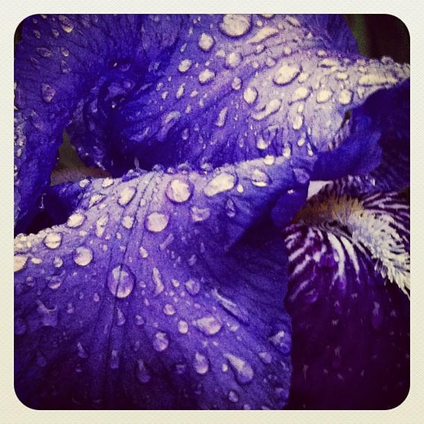 violet rain drops (instagram)
