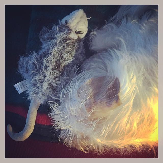 a boy and his o'possum (instagram)