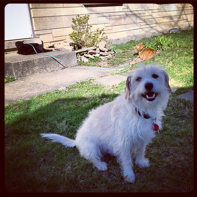 fur family sun day (instagram)