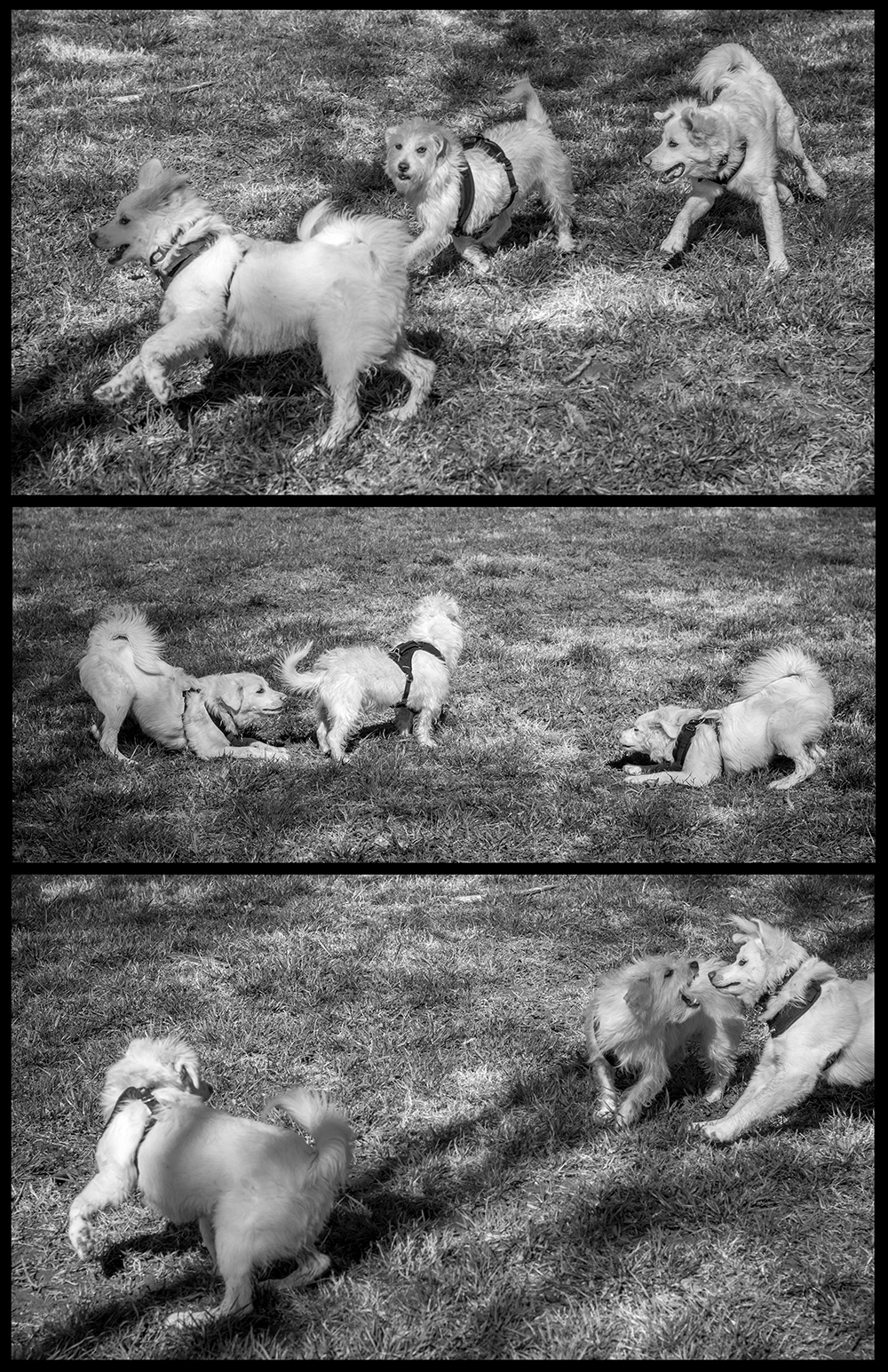 walk, talk, play, chase